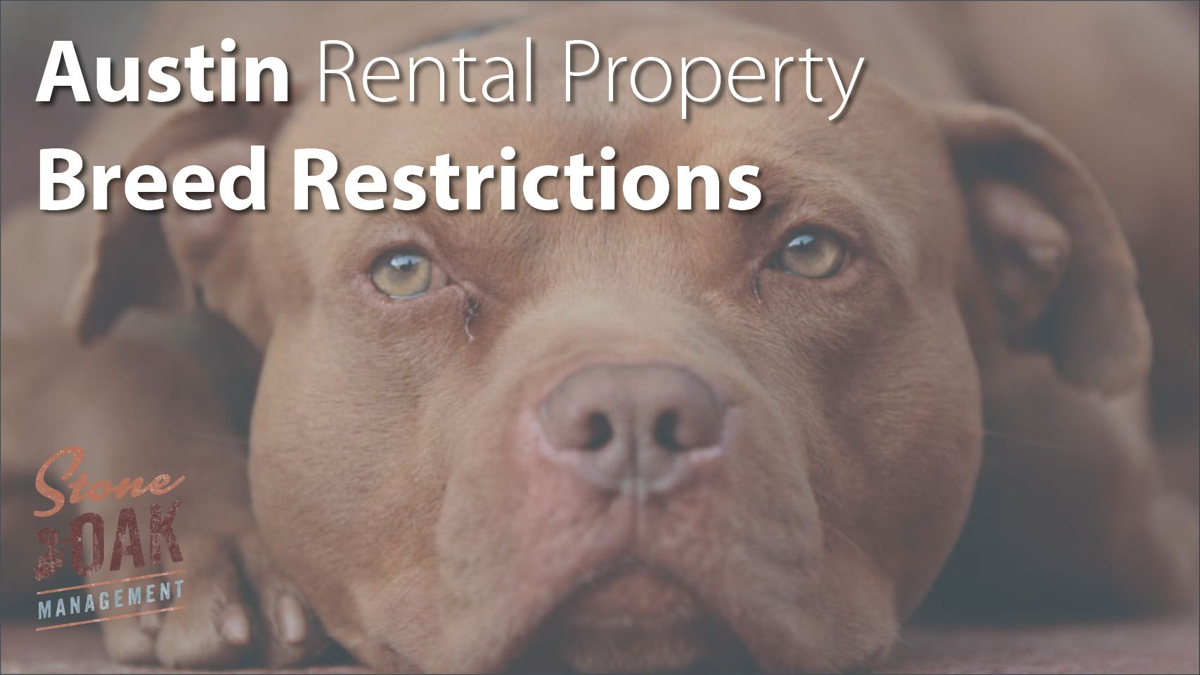 Breed Restrictions for Austin Rental Properties